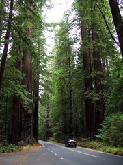 California2015-10 (Felson.) Tags: california park wood trip travel trees parco usa holiday verde green alberi forest strada honeymoon national redwood norcal avenue sequoia viaggio vacanza bosco foresta nazionale avenueofthegiants