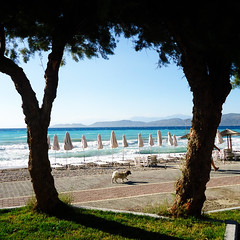A walk (Argyro...) Tags: sea dog tree beach animal umbrella seaside corinth greece  kalamiabeach