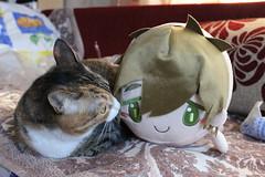 IMG_1858 (toetsu) Tags: cats cat kitten kittens neko tachibanamakoto