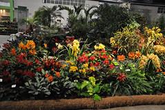 2016-03-11_0291n_waldor (lblanchard) Tags: orchid waldor displaygarden 2016flowershow