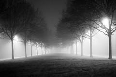 20131211-03050003.jpg (Eddy Reeves) Tags: md minolta kodak trix x300