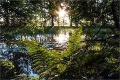 Am Teich (firlie.de) Tags: teich sonnenaufgang firlie