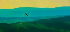 Freedom.... (tomk630) Tags: blue mountains bird nature dawn freedom virginia flight ridge