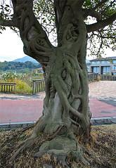other side of cool tree (gwilli) Tags: animated gif wiggly japan japan2014 sakurajima
