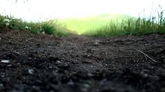 Madre Terra  Sogner solo pace, alba e sole (carlini.sonia) Tags: sonia castelluccio norcia montagna vento brezza prato verde sibillini umbria italia italy terreni agricoli rasoterra
