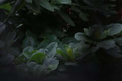 Cold & Darkness (chanmyaeei) Tags: cold nature leaves photography darkness mysterious