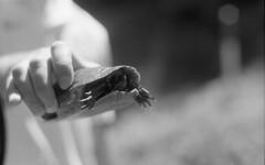 Turtle Turtle (yesimahuman) Tags: vacation lake film wisconsin 35mm cabin minolta kodak trix 400 filmphotography srt100 cabinporn