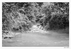 misty river (Alja Ani Tuna) Tags: blackandwhite bw white mist black nature water river spring day 20 nikkor f18 karst dailyphoto d800 ljubljanica 85mmf18 project365 onceaday 20365 nikkor85mm photo365 onephotoaday nikond800