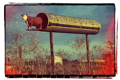 ACE PIPE AND STEEL--NO BULL (akahawkeyefan) Tags: crazy steel pipe merced bull advertisement steer highway99 davemeyer