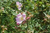 Saquoit River, Mashpee (pictureguy89) Tags: capecod mashpee coastline flor flower blumen corderosa pink