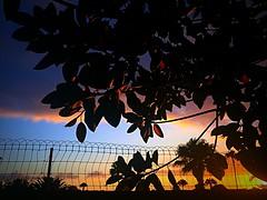 Colori (Lorybusin) Tags: natura naturaleza nature colores colors leaves foglie hojas puestadelsol tramonto sunset