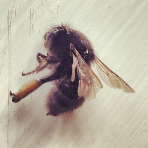 [This is a dead fly. ]