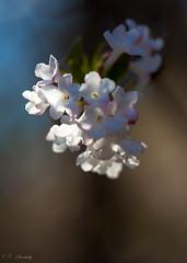Light gives life (nemi1968) Tags: flowers light flower macro oslo closeup canon spring outdoor botanicalgarden botaniskhage markiii ef100mm ef100mmf28lmacroisusm