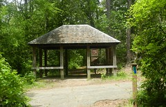 Parvin Lake Trail (Christine_Ray) Tags: park county new pine state reserve national jersey pinelands salem barrens parvin belleplaincapemayandparvin