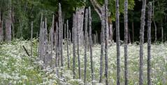 Sweden nature (annsphoto) Tags: nationalpark natur excellent sommar smrgsbord garphyttan nrke grdesgrd