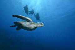 2012 12 METTRA OCEAN INDIEN 5455