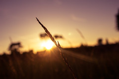 Summer Nights II (FranklyVic) Tags: summer sky sun nature field grass sunshine silhouette golf golden evening lensflare nights goldenhour