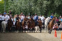 DSC04839 (Schep_B) Tags: fun hcm gents wedstrijd paarden muiderberg goededoel paardensport sistershope hippischcentrummuiderberg rvanydale mannenles lesuurkampioenschap