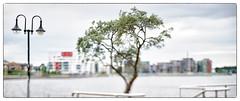 Rostock Bonsai (georgsfoto) Tags: panorama stitched rostock heimat stadthafen pc8528d