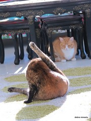 coco and tilly (damselfly58) Tags: cat furry feline funny chat gatos gatti
