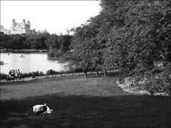 Central Park (TheJonCrane) Tags: street nyc urban blackandwhite monochrome digital photography centralpark streetphotography lovers popular photojournalist nycparks featured capturedmoments
