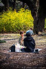 2013_03_28A_Shinjuku_Gyoen_124_HD (Nigal Raymond) Tags: travel japan canon landscape photography tokyo photo shinjuku 桜 cherryblossom 日本 sakura 5d 新宿御苑 東京 hanami shinjukugyoen 写真 さくら 花見 日本国 レイモンド nigalraymond wwwnigalraymondcom canon5dmkiii canon5dmk3 ナイジャルレイモンド ナイジャル 20130328 ナイジャル レイモンド