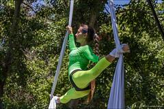 Moni & My (eugene.photo) Tags: california usa girl sunnyvale july places fabric acrobatics ribbon persons tissu leggins 2013 aerialsilks aerialacrobatics aerialcontortion aerialribbons aerialtissues monimy