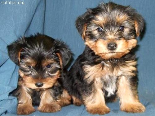 Filhotes de cachorros 39