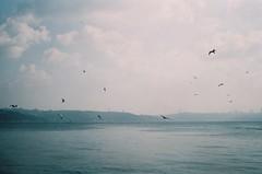 (Zheyra Toka) Tags: sea sky seagulls film clouds istanbul dreamy hazy bosphorus prakticalb2 50mmf28 sooc