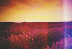 Untitled (DavidPato) Tags: sunset sky film clouds 35mm lavender fields