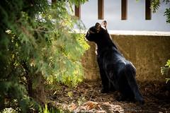 DSC_0362 (Katarina Drezga) Tags: cats pets cute cat feline kittens domesticcat petphotography nikond3100 nikkor55300mm4556gvr