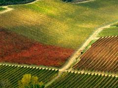 Tuscany 55 (explored) (lotti roberto) Tags: tuscany toscana autumn autunno paesaggio landscape vigneti vineyards outdoor blinkagain fav25 fav50 fav75 fav100 fav125