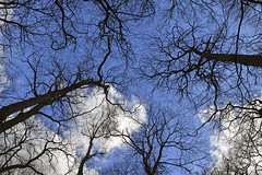 LIVING LIFE WITH YOUR HEAD IN THE CLOUDS (DESPITE STRAIGHT LINES) Tags: trees winter cloud tree up clouds forest aperture woods woodlands nikon flickr branch dof cloudy branches perspective bluesky aerial foliage photograph bark serenity getty canopy ultrawide cloudscape treehugger manfrotto d800 reachingout blueyonder abbeywood 14mm paulwilliams samyang lyingontheground manfrottotripod thegreatblueyonder lesnesabbeywood canopyoftrees nikongps nikond800 nikongp1 samyang14mm despitestraightlines samyangae14mmf28edifumc samyangultrawidelens samyangfornikon photoswithsamyang14mm samyang14mmandd800 d800andsamyang14mm samyang14mmandnikond800 ilobsterit talkingwithtreestreehugging