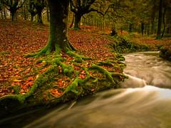 Hayedo (Kepa_photo) Tags: naturaleza verde green nature rio digital river autum natura olympus bosque otoño habitat zuiko haya basoa hayedo olympus43 olympuse3 digital43 kepaphoto kepaargazkiak riodeseda