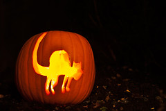 Halloween Cat (Steve Purnell Photography) Tags: autumn food orange fall halloween dark pumpkin scary jackolantern trickortreat ominous evil carving flame horror lantern flaming autumnal