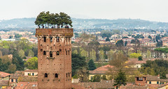 All along the watchtower (Franco Beccari) Tags: world city trip travel blue trees red vacation people italy white holiday black color colour green tower tourism monument nature yellow architecture photography nikon europe lucca medieval tuscany nikkor d600