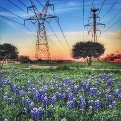 the bluebonnet trail at sundown (vrot01) Tags: sunset clouds canon texas sundown bluebonnet explore trail wife tamron stateflower eosm bluebonnettrail canoneosm 5017f28