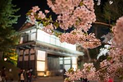 Minami-Uchi-mon gate with night cherry (gemapozo) Tags: japan night cherry nikon gate blossom aomori 日本 sakura hirosaki d800 夜桜 hirosakipark 青森県 ライトアップ 弘前公園 弘前市 afsnikkor35mmf18ged minamiuchimon