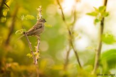 The bird (Lilian Thoumire Photography) Tags: green bird nature colors animal photography photo nikon flickr natural bokeh couleurs nikkor faune youngphotographer 55300 d3300 jeunephotographe lilianthoumirephotography