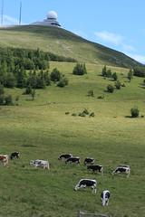 Le sommet du Grand-Ballon (Haut-Rhin, Vosges) (bobroy20) Tags: france colmar alsace vosges vache tourisme massif mulhouse mto thann chaume guebwiller troupeau grandballon bovin stationmtorologique vosgiennes massifvosgien