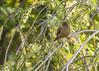 Bird (ElTico68) Tags: bird costarica barva barvaheredia