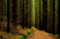Path through the woods (Dan_Fr) Tags: trees scotland highlands woods nikon glencoe orton ballachulish d5100 thepinnaclehof tphofmarch2015