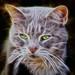 Cat-Art-C