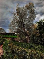 Bord de Seille oct 2014 (domiloui) Tags: nature clouds arbres paysage lorraine campagne arbre couleur canton bois ambiance documentaire feuillage lothringen cooliris meurtheetmoselle nomeny abaucourt canceledgroup