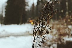 2015-02 (miironnov) Tags: winter white snow cold color macro ice nature beauty weather forest season amazing cool day russia good wintertime gulfoffinland piter goodday