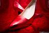 _DSC0178 (Demon Wu) Tags: nikon 婚紗 造型 d610 化粧 新娘秘書 新秘