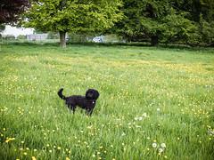 Shadow plays in a meadow I - LR6-5161583-web (David Norfolk) Tags: uk england unitedkingdom olympus gloucestershire westonbirt gb epl7