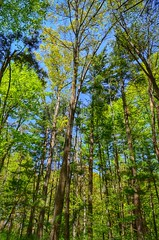 Colorful Spring Forest (mswan777) Tags: sky color green nature forest leaf spring nikon hiking scenic sigma trail tall wilderness 70300mm d5100