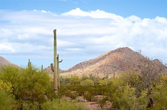 Saguaro (hecticskeptic) Tags: arizona birds spring woodpecker squirrel hummingbird desert cardinal nogales birding az deer hummingbirds morgan californiadesert maderacanyon arizonadesert southernarizona mexicanjay eleganttrogon lakepatagonia markmorgan markamorgan