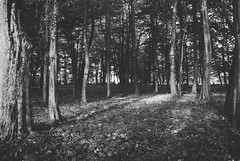 Betnavski Gozd (Sareni) Tags: trees light blackandwhite bw tree grass leaves spring woods shadows branches may slovenia slovenija mb maribor 2010 suma twop drvo trava prolece svetlost granje lisce gozd drvece senke crnobela betnava sareni betnavskigozd